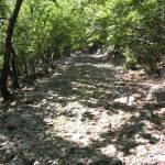 beli path